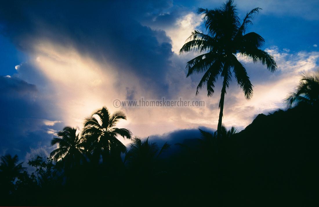 karibik-sunset-palmen